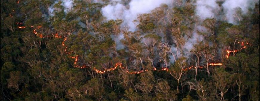 The Bushfire and Natural Hazards CRC and Australian Academy of Science held a three-part webinar series to lay the foundations of a future national approach to hazard reduction burning. Photo: Adam Leavesley/ACT Parks and Conservation Service