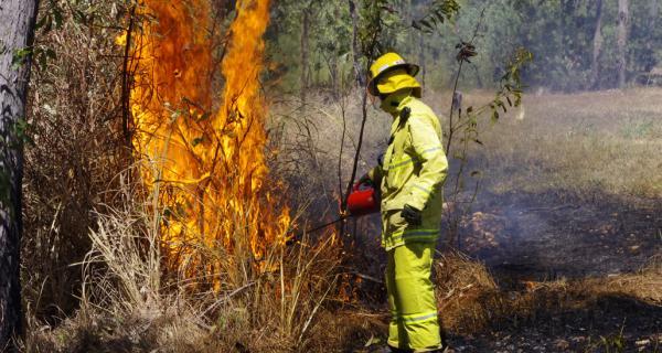Gamba grass burn