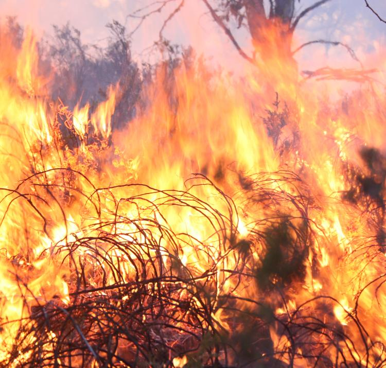 Fire in the Australian high plains