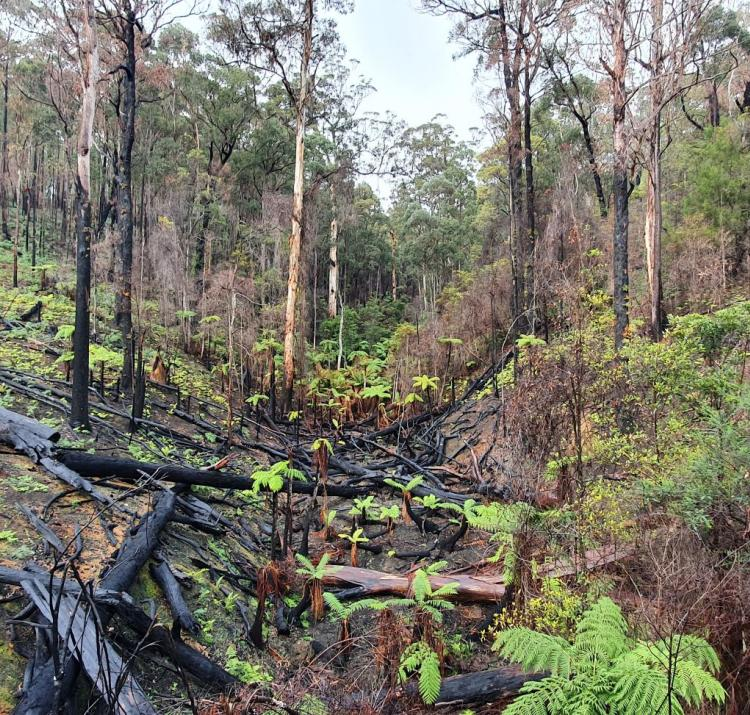 The CRC is conducting important post-fire research with donated funds. Photo: Dr John Bates, Bushfire and Natural Hazards CRC