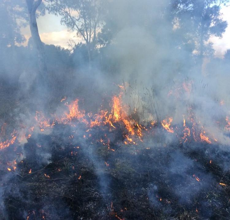 Spring 2015 prescribed burn. Photo: ACT Parks & Conservation Service