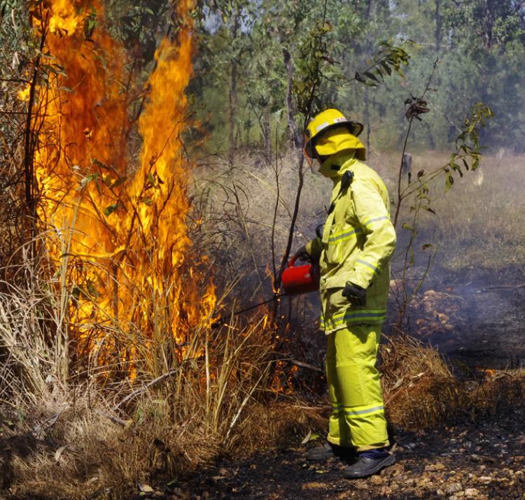 Hazard reduction of gamba grass around Darwin. Photo: Nathan Maddock