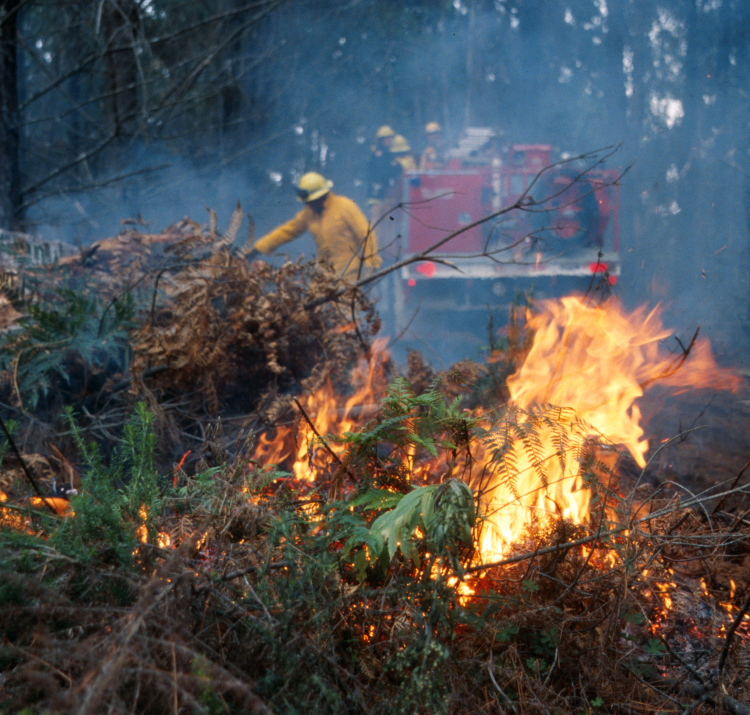 New bushfire and ecology research is taking place. Photo: CFA