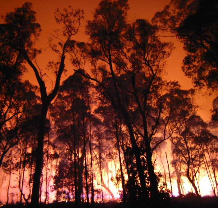 Photo by the Department of Environment, Land, Water and Planning Vic