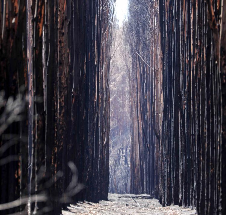 Bushfires have complex impacts on the economy, including effects on forestry. Photo: SA SES