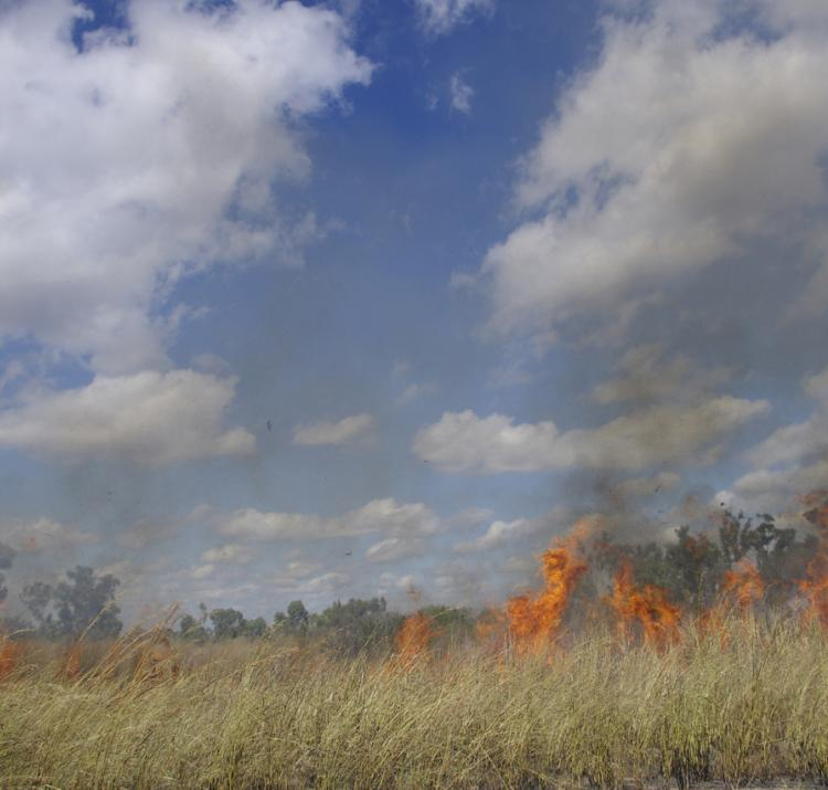 Prescribed burn of an area infested by Gamba grass near Darwin.