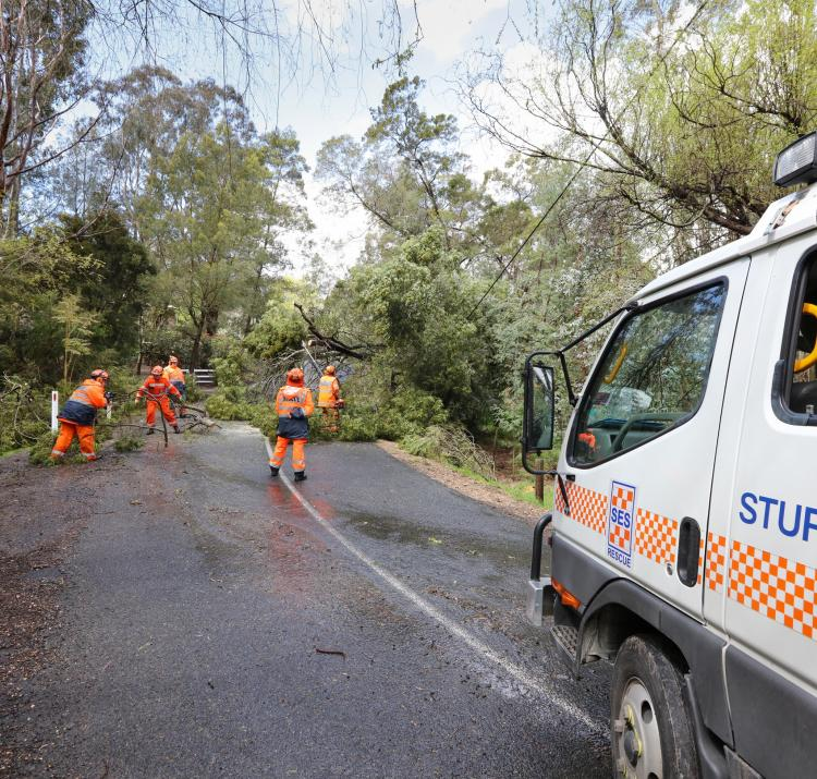 South Australian State Emergency Services crew managing a fallen tree during the September 2016 Adelaide floods. Photo: South Australia SES.