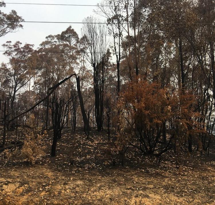 NSW 2019/20 fire damage. Photo: NSW SES