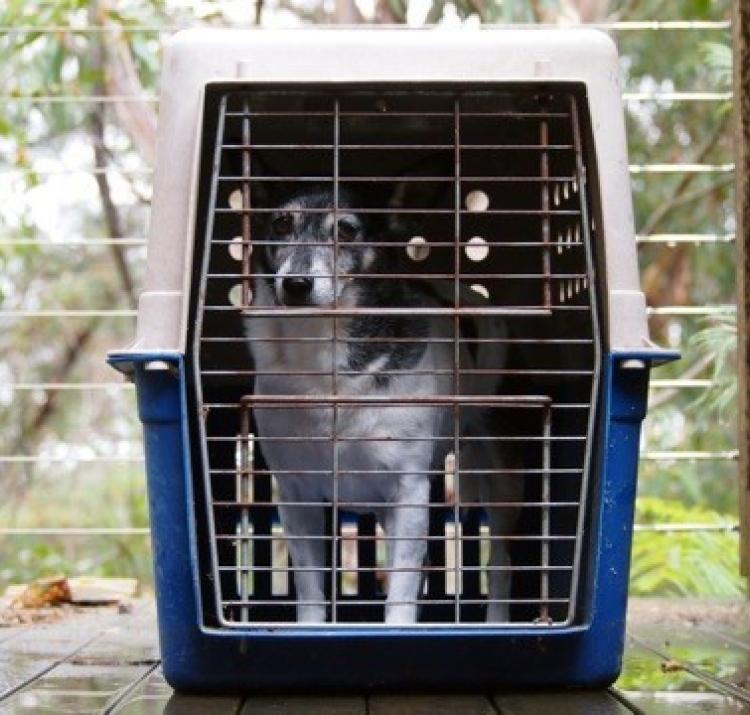 Two out of three Australian homes have a pet, but they are one of the most overlooked parts of preparing for an emergency. Photo: Jenny Bigelow.
