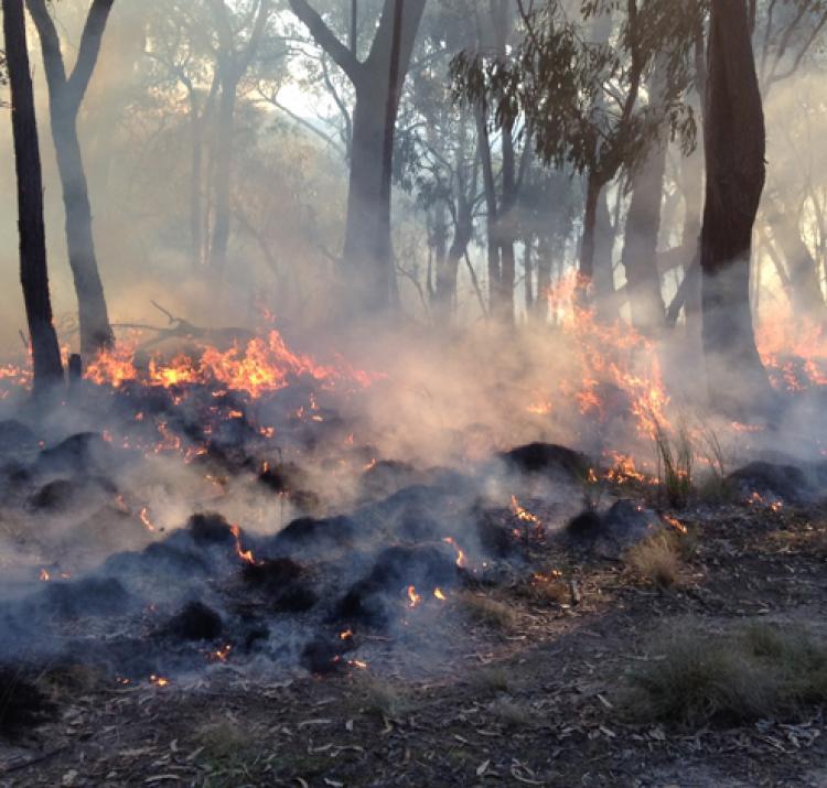 St Andrews prescribed burn