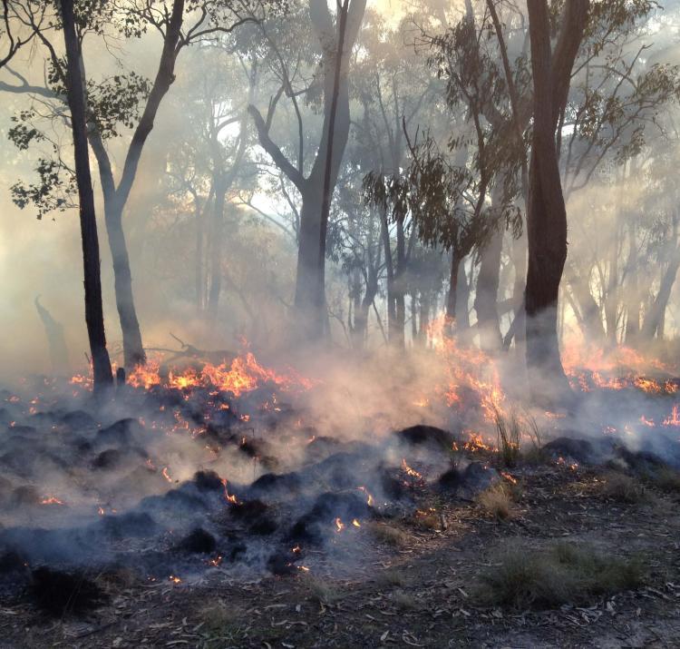 A prescribed burn in St Andrews, Victoria. Photo: Karin Reinke