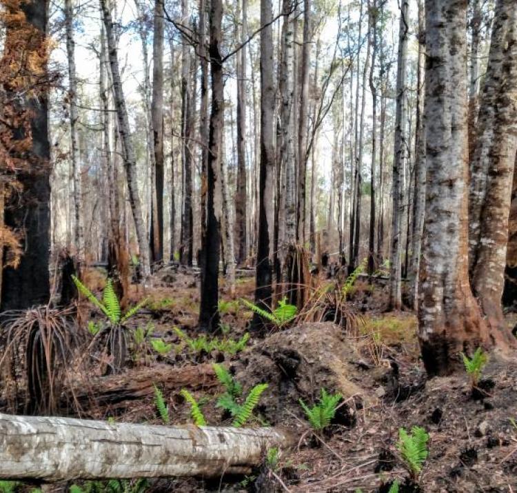 Tasmanian wet eucalypt forest. Photo: James Furlaud