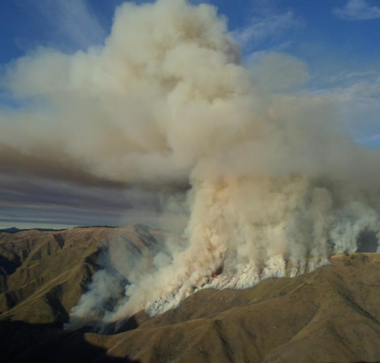 Wind accounts for much variability in fires. Photo: New Zealand Fire Service