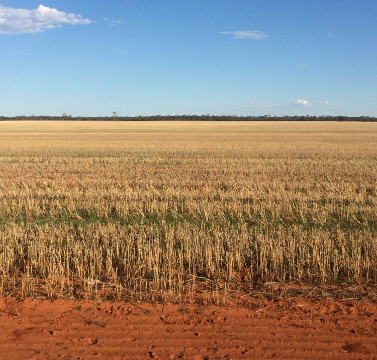 Wheatbelt, WA. Photo by Briony Towers