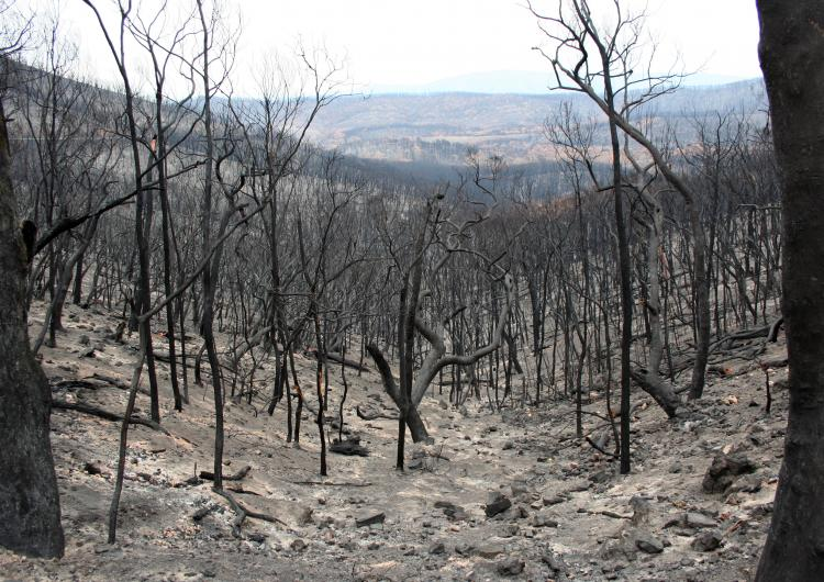 We need a stronger investment focus on mitigation. Photo: David Bruce.