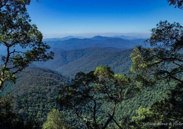 Gondwana rainforest, New England National Park NSW. Photo: Tatters Flickr (CC BY-NC 2.0)