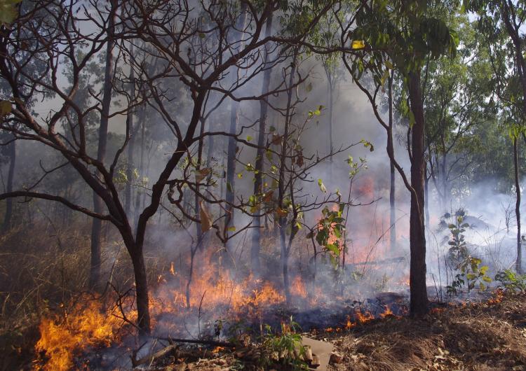 Robertson Barracks, Darwin. Photo: Bushfire and Natural Hazards CRC