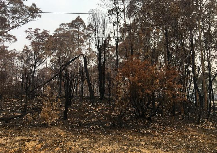 NSW 2019/20 fire damage. Photo: NSW SES
