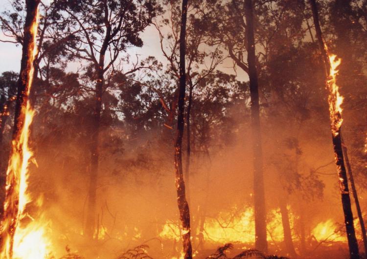 Forrest fire in bushland near Ballarat Victoria. Photo: DSE.