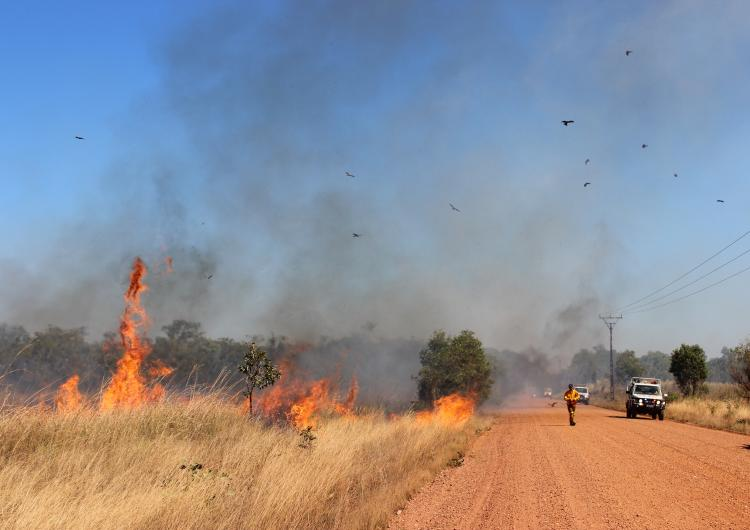 Birds flying over a prescribed burn down Kentish Rd in the Northern Territory. Photo: Tina Holt.