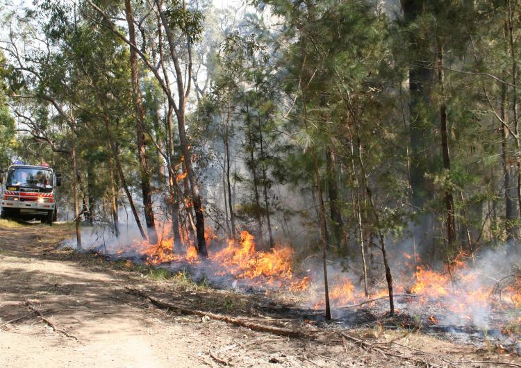Low intensity burn in forest. Photo credit: NSW RFS.