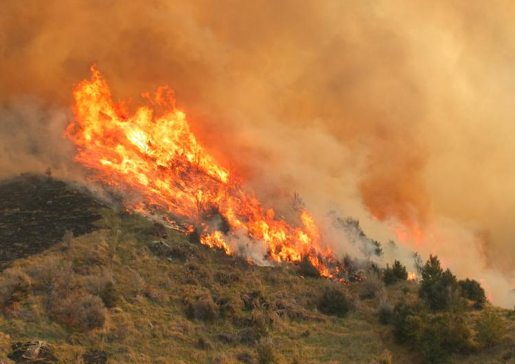 Fire in the landscape. Photo credit: Fire and Emergency NZ.