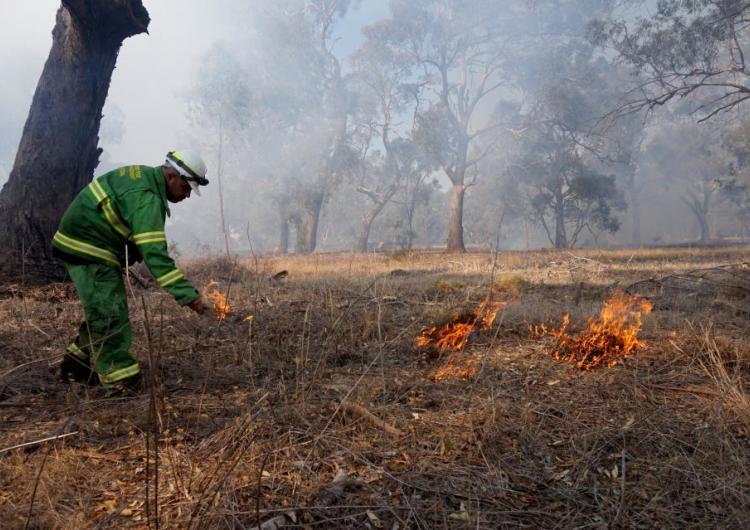 Mick Bourke, a Dja Dja Wurrung man and district planner at Forest Fire Management Victoria, practicing djandak wi (healthy fire). Photo: Timothy Neale.
