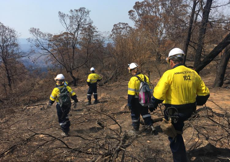 Animal Evac NZ searching for wildlife at the request of the land owner Black Summer Fires 2020. Photo credit: Steve Glassey.