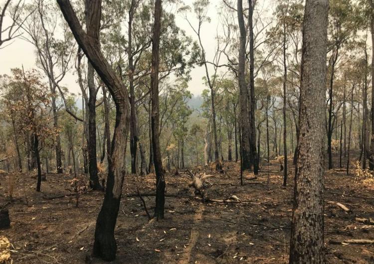 Post 2019 Banyabba bushfires. Photo: Lukas Gibb