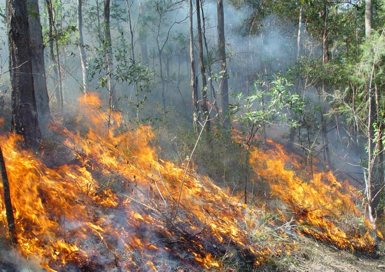 Fire spreading through understory in Queensland bushland. Photo: QRFS.