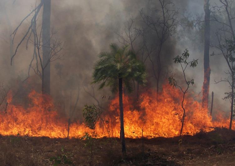 A fire within tropical savanna bushland of northern Australia. Photo: Ken Scott.