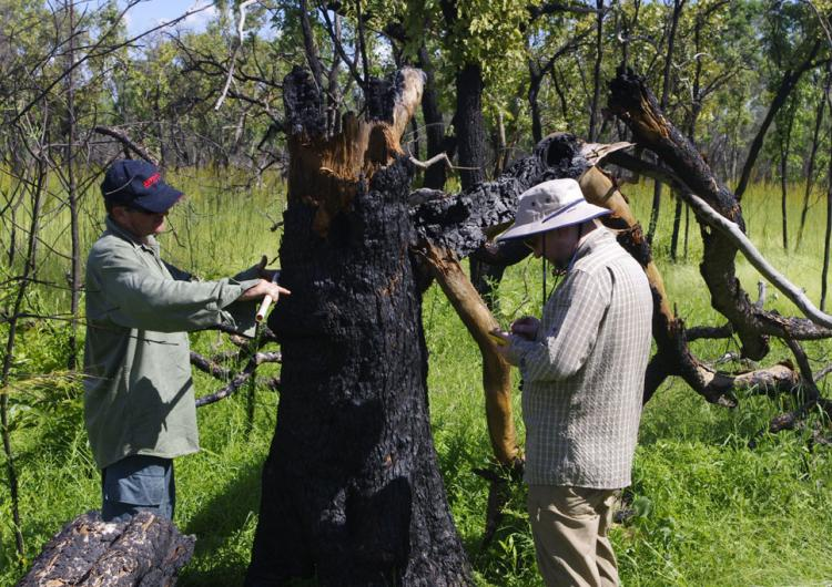 Dr Andrew Edwards (left) measures the diameter of a tree killed by the fire, while Grigorijs Goldbergs (right) records the data.