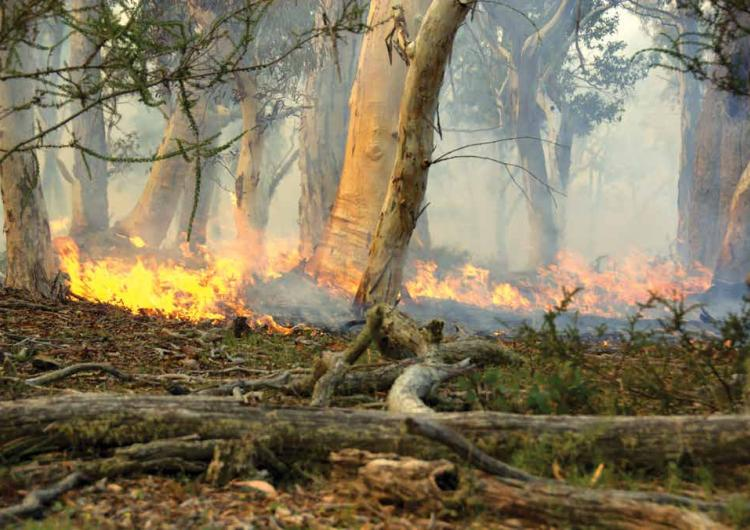 A low-intensity prescribed burn removing leaf litter and debris from the ground. Photo: Marta Yebra