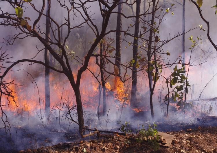 Large areas of northern Australia burn each year, affecting the environment and carbon emissions. Photo: BNHCRC