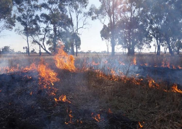 Djandak wi cultural burn at Myola, Victoria 2018. Photo: Timothy Neale