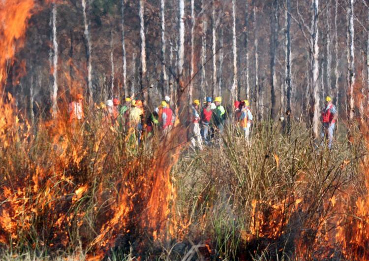 Prescribed burning taking place in NSW.