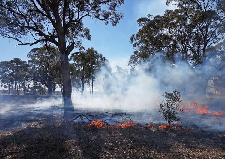 """Encouraging sign: a djandak wi (""""healthy fire"""") burn on Dja Dja Wurrung Country, Victoria, in April 2018. Photo: Timothy Neale"""