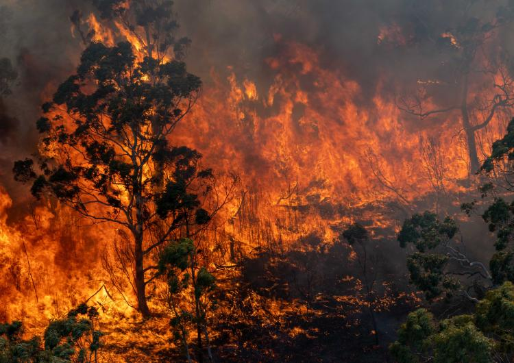 Bushfire raging on the North Black Range, December 2019. Photo: Ned Dawson/NSW Rural Fire Service