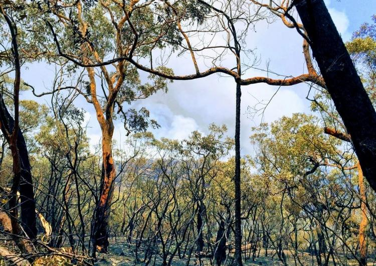 Three Mile fire, north of Wisemans Ferry. Source: NSW RFS Hawkesbury District