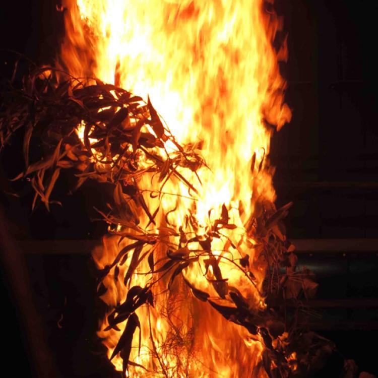 Burning tree