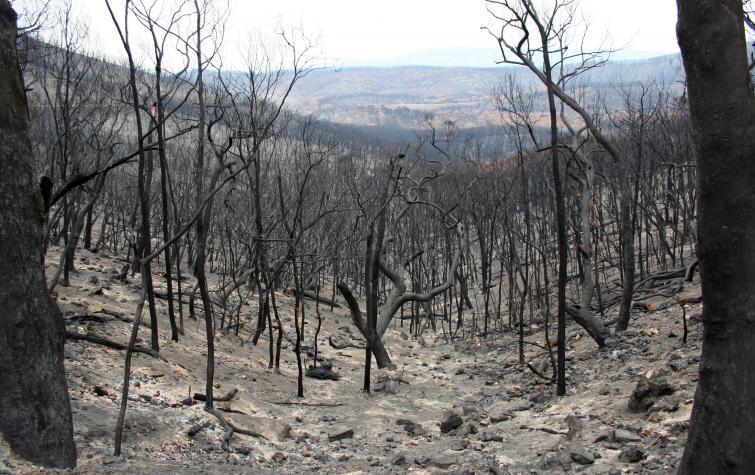 The Kinglake region after the Black Saturday bushfires in 2009