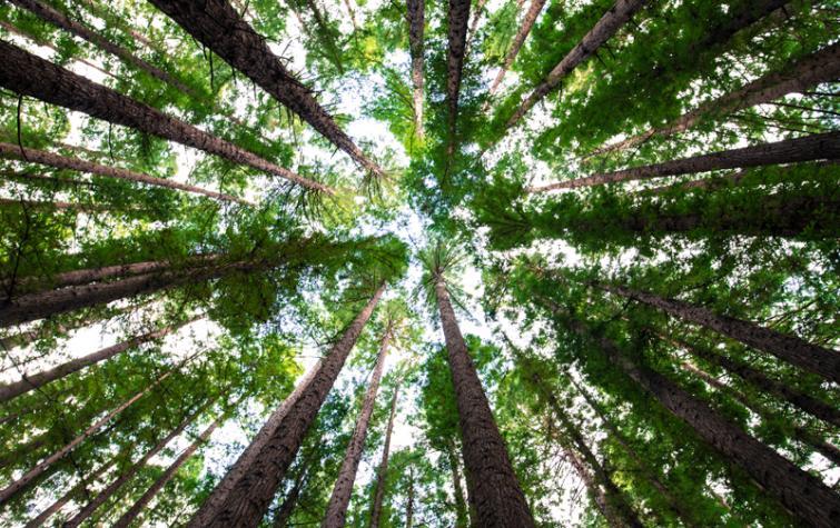 A green canopy overhead. Photo: Arnaud Mesureur