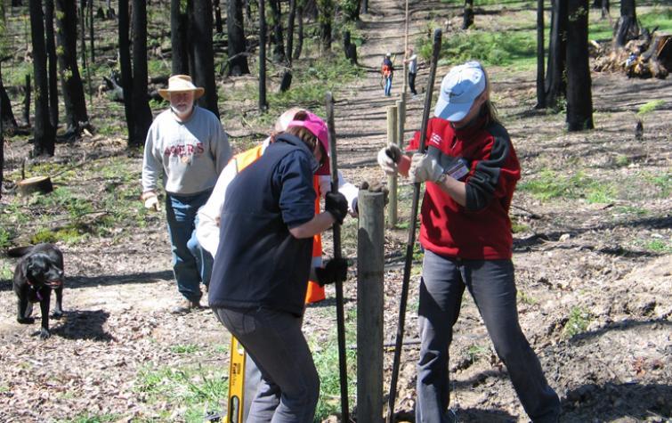 BlazeAid volunteers putting in fences after Black Saturday. Photo: BlazeAid