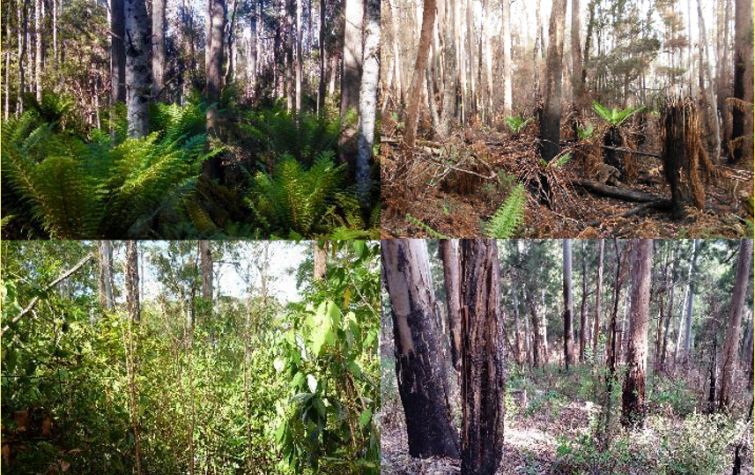McKenzie and Lamb Range Ausplots in Tasmania before and after the fires. Photos: James Furlaud and Elinor Ebsworth.