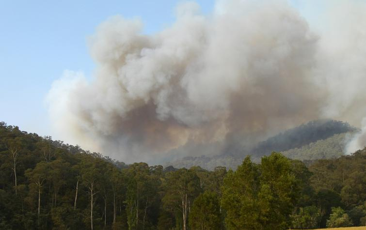 Smoke plume from bushfire. Photo credit: DSE.