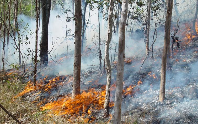 Fire in open woodland. Photo credit: QFES.
