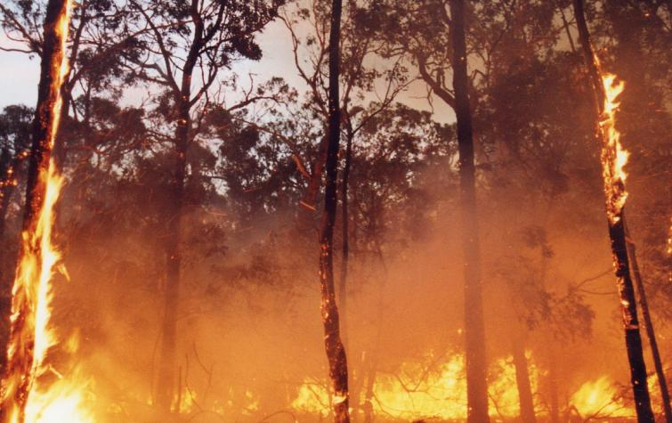 Forest fire.