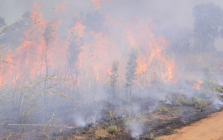 Grassfire in Northern Territory