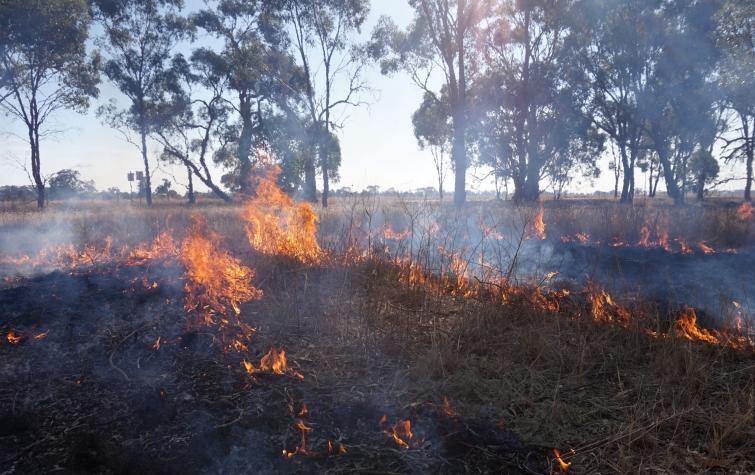Djandak wi cultural burn at Myola, Victoria. Photo: Timothy Neale, 2018
