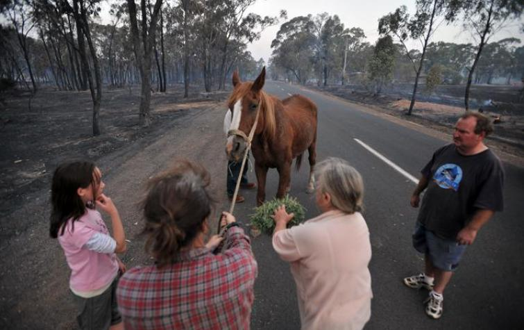 Managing animals during hazards. Photo: Bendigo Advetiser